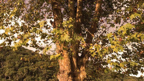 5 para sua pele e saúde com a chegada do Outono